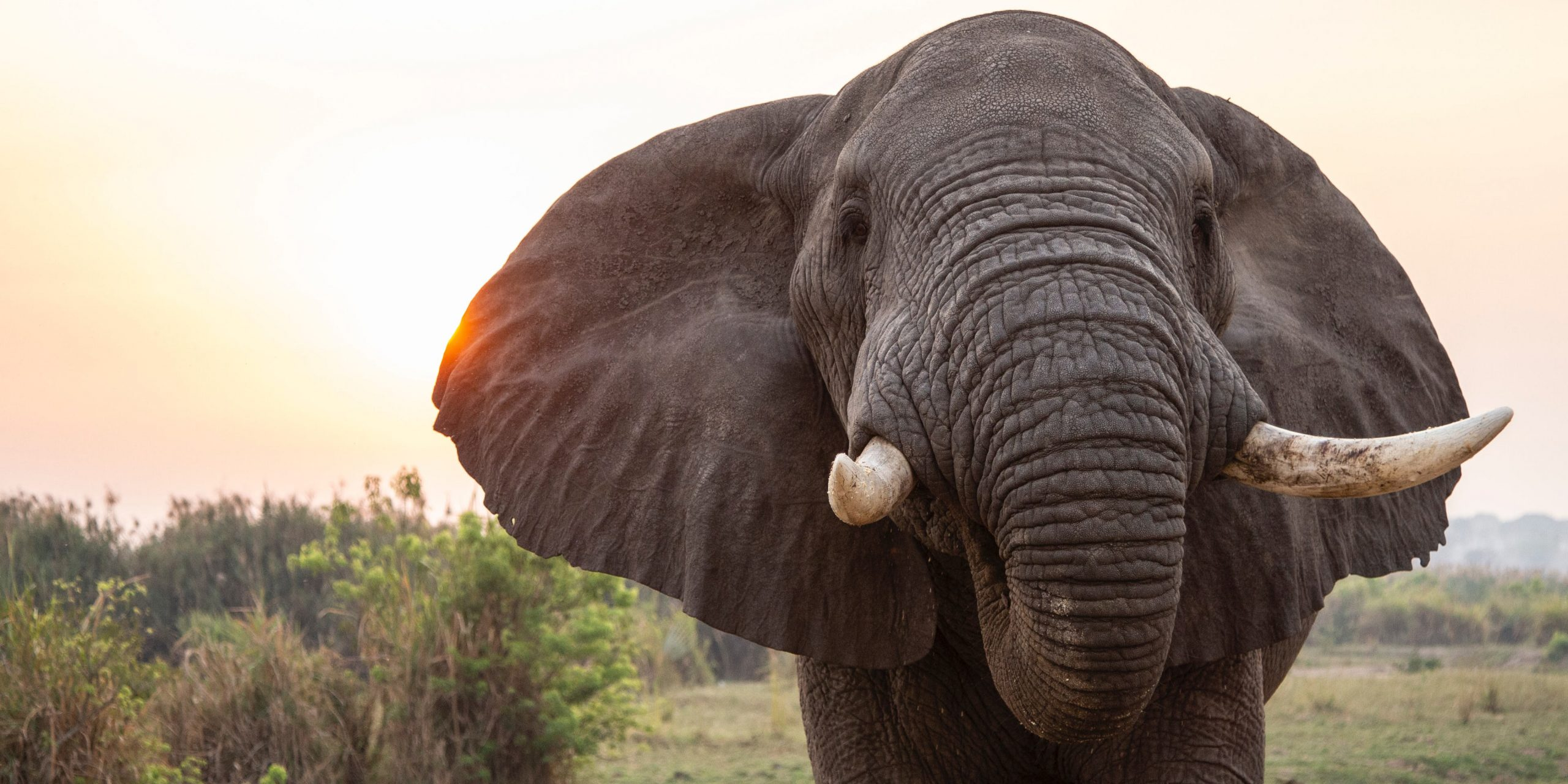 Gifts For Elephant Lovers