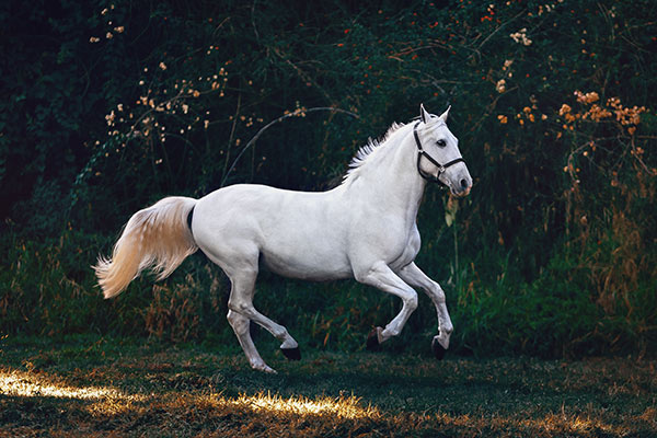 Gifts For Horse Lovers