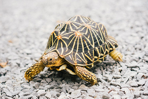 Gifts For Turle Lovers