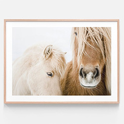 Horse Themed Gifts Wall Art