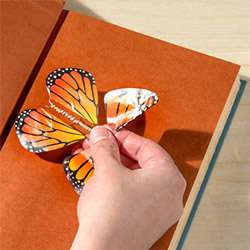 Gifts For Butterfly Lovers Card Insert
